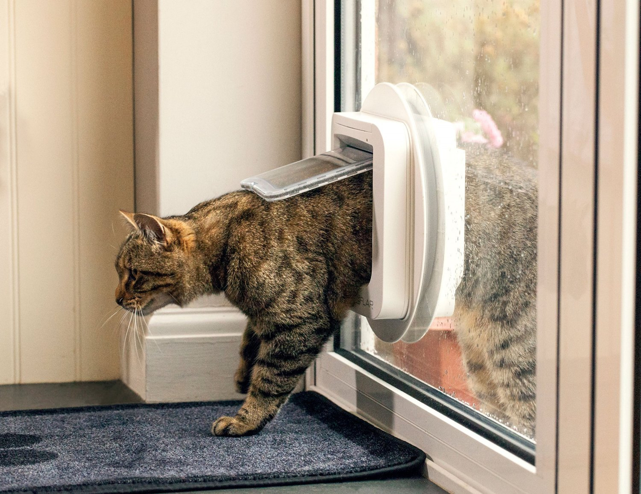 installed to right doors litter cat wall small box in a flap door garage the pin via access