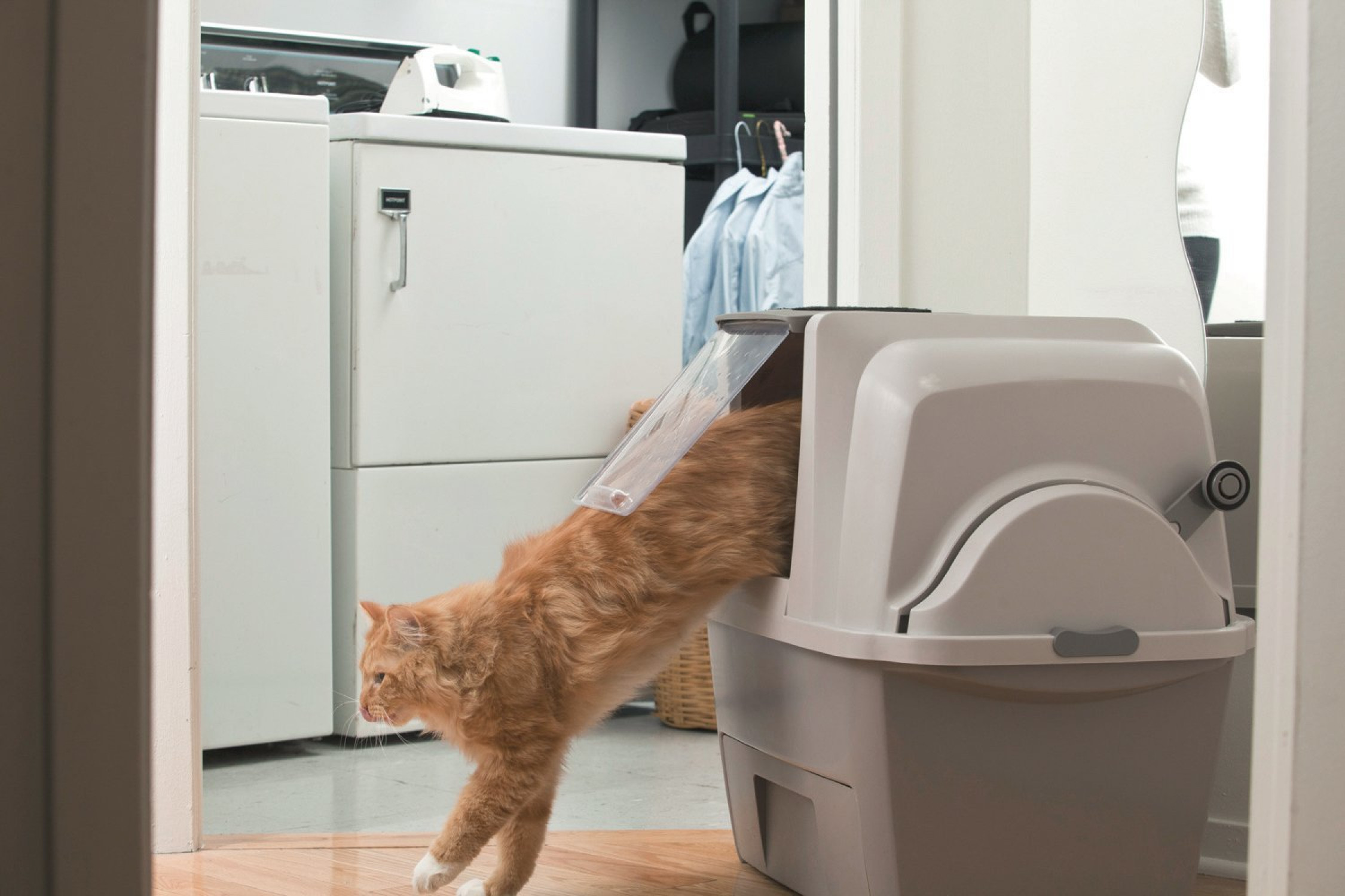 how to clean a litter tray